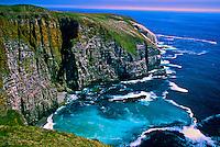 Cape St. Mary's Ecological Reserve, Avalon Peninsula, Newfoundland, Canada