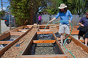 July 24, 2010. Watering the Gypsum for the final preparations of the planting beds at the Venice Community Garden. The 2 foot deep beds are layered with 3 inches of rocks as a buffer between the roots and the bad soil below, but will still allow water to drain. White Gypsum powder is spread on top of the rocks and then watered to break down the soil particles and hard clay below for better drainage and to enable aeration by worms and microorganisms. Plastic sheeting is stapled around the sides of the beds to keep toxins (such as the arsenic and lead found in the soil samples), to leach into the soil during rains. Weed cloth is then stapled around the beds to prevent the roots from tearing a hole in the plastic sheeting and accessing the toxic soil on the outside. For the planting soil, a 50/50 mix of organic matter and city compost is layered on top of the rocks, and beds are now ready for planting. The Venice Garden broke ground in April, 2010. Soil tests revealed high levels of arsenic and lead because of previous uses which included a railroad line going through the lot. Steps were taken which included adding protective layers and adding new soil. Planting began in August and the first harvest was in October, 2010. Venice, California, USA