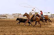 Will James Roundup, Ranch Rodeo, Big Loop, Hardin, Montana, KC Verhelst