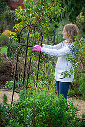 Make sure obelisks are firmly fixed in the soil so they don't get blown over during winter storms.