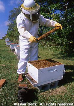 Beekeeper and Beehive, Cumberland Co., PA