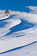 Winter scenery and landscapes in Yellowstone National Park