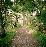 A path running through the woods in the Asturias, Spain