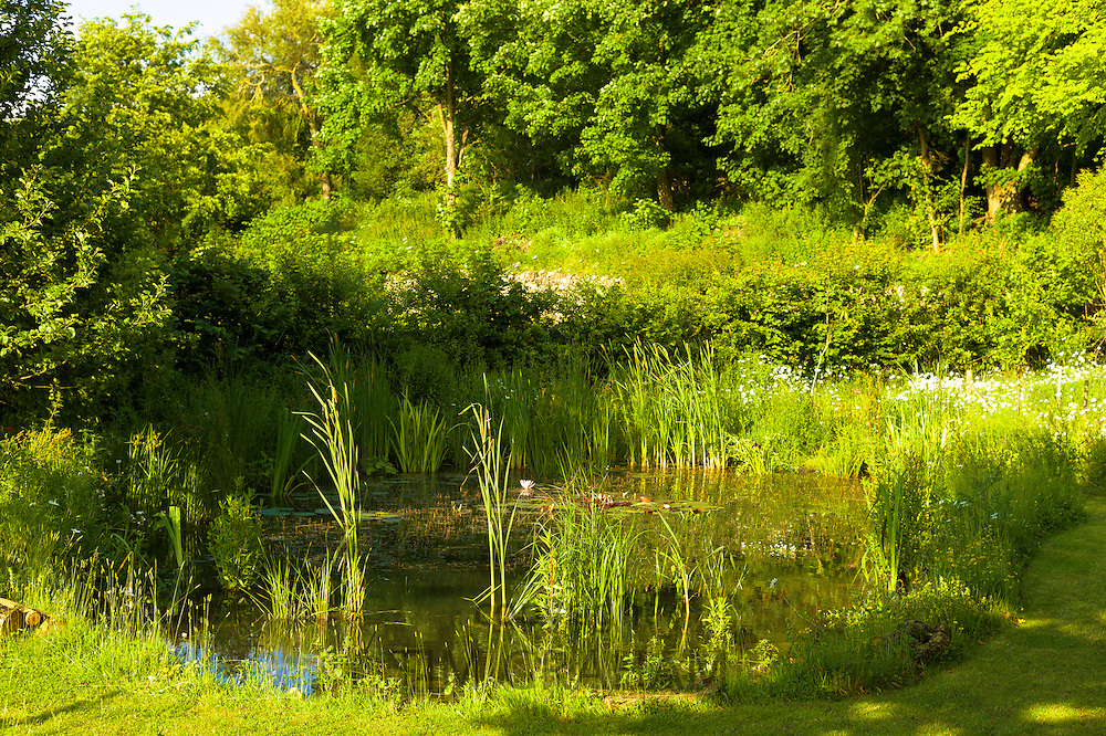Garden wildlife pond in summer in country garden in Swinbrook, The Cotswolds, England, United Kingdom