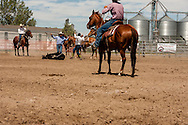 Will James Roundup, Ranch Rodeo, Yearling Doctoring, Severe Team, Hardin, Montana.