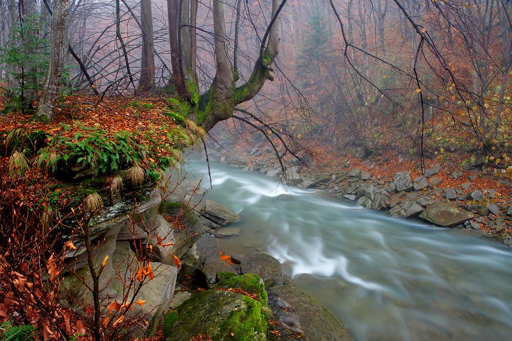 """Sine Wiry"" Reserve, Poland"