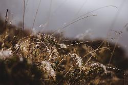 THEMENBILD - Gras mit Tautropfen bei einer Wanderung zum Wildsee mit dem Wildseeloderhaus, aufgenommen am 20. Oktober 2018 in Fieberbrunn, Österreich // Grass with dew drops on a hike to the Wildsee with the Wildseeloderhaus, Fieberbrunn, Austria on 2018/10/20. EXPA Pictures © 2018, PhotoCredit: EXPA/ JFK