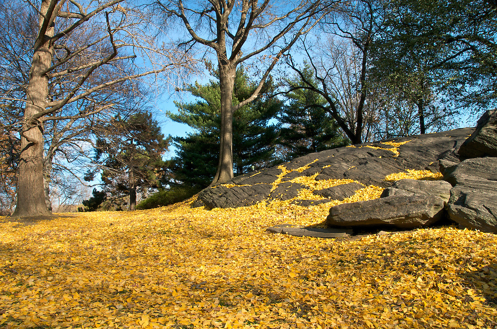 View of typical landscape in Central Park during winter time and autumn, New York.