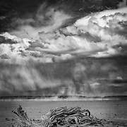 A windstorm blows in the background at the Alvord Desert, a dead sage branch fills the foreground and broken clouds cover the sky