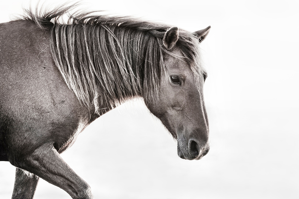 """""""Humility is not thinking less of yourself, but thinking of yourself less"""" ~ C.S. Lewis<br /> <br /> Tracie Spence's fine art photography series of The Spanish Wild Mustangs."""