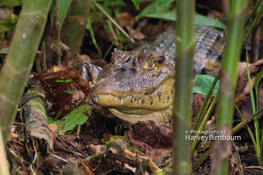 Costa Rica 1-14_23-09 Tortuguero National Park..