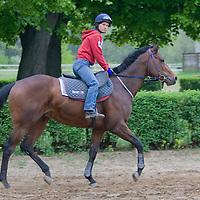 Practice session of Hungarian wonderhorse called Overdose, Dunakeszi, Hungary. Friday, 17. April 2009. ATTILA VOLGYI
