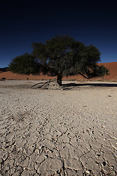 NAMIBIA SOSSUSVLEI 22APR14 - Cracked clay ground in the Deadvlei during sunrise in the Sossusvlei in the Namib Desert, Namibia.<br /> <br /> Sossusvlei is a salt and clay pan surrounded by high red dunes, located in the southern part of the Namib Desert, in the Namib-Naukluft National Park, which is one of the major visitor attractions of Namibia.<br /> <br /> jre/Photo by Jiri Rezac<br /> <br /> © Jiri Rezac 2014