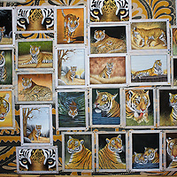 Paintings, displayed on the wall of a local shop. Many stores, devoted to tiger memorabilia are scattered along the edge of Rantambore National Park. Businesses like this shop are entirely dependent on the presence of tigers in the park. ..Sariska National Park in Rajasthan was once home to dozens of tigers but by 2005 poaching had resulted in their complete eradication. Recognising the urgent need for intervention, the Indian and Rajasthan-state governments began the reintroduction of tigers into Sariska. Two cats were airlifted 200 km from Ranthambore National Park in June 2008. On November 5th an attempt to relocate a third tiger was postponed until later in the month. This relocation strategy is certainly an important part of the tiger conservation effort but many, including those like Dharmendra Khandal of the NGO Tiger Watch, argue that it will never be entirely successful without properly confronting the three essential issues that threaten tiger populations: poaching, habitat loss and the hunting of prey-base animals. In turn, these three issues cannot be addressed without acknowledging the malign influence of caste, poverty and poor administrative accountability. Poaching is almost exclusively undertaken by extremely poor and marginalised groups, including the Mogia caste who, without education, land and access to credit have limited alternative means of income. Many in the Mogia community also hunt bush meat for both their own consumption and to sell to others. This results in a depletion of the prey-base upon which tigers feed. Encroachment and grazing by those including the Gujar people who raise dairy herds, have led to habitat loss in Sariska and other parks. To properly tackle the problem of hunting and encroachment, the government must provide alternative livelihoods for marginalised groups and relocate them to viable land before - rather than after - the re-introduction of tigers. Compounding all these issues is the ridged hierarchy of India's fores
