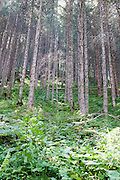 Austria, Tyrol, Hohe Tauern National Park the Krimmel forest