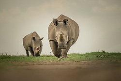 Fat and Najin, the last two Northern White Rhinos left on the planet, graze March 20, 2018 at Ol Pejeta Wildlife Conservancy in northern Kenya. Their father, Sudan, the last male Northern white rhino passed away on March 19 after living a long, healthy life  after he was brought to Kenya from Dvur Kralov zoo in the  Czech Republic in 2009. He died surrounded by people who loved him at  after suffering from age-related complications that led to degenerative changes in muscles and bones combined with extensive skin wounds. Sudan has been an inspirational figure for many across the world. Thousands have trooped to Ol Pejeta to see him and he has helped raise awareness for rhino conservation. The two female northern white rhinos left on the planet are his direct descendants. Research into new Assisted Reproductive Techniques for large mammals is underway due to him. The impact that this special animal has had on conservation is simply incredible. And there is still hope in the future that the subspecies might be restored through IVF. <br /> In 2009, I had the privilege of following this gentle hulking creature on his journey from the snowy Dvur Krulov zoo in the Czech Republic to the warm plains of Kenya, when he was transported with three of his fellow Northern White Rhinos in a last ditch effort to save the subspecies. It was believed that the air, water, and food, not to mention room to roam, might stimulate them to breed—and the offspring would then be used to repopulate Africa. At the time, there were 8 Northern white rhinos alive, all in zoos. Today, we are witnessing the extinction of a species that had survived for millions of years but could not survive mankind. (Photo by Ami Vitale)