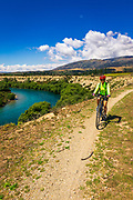 Cyclist on the Upper Clutha River Track, Central Otago, South Island, New Zealand