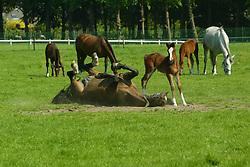 Haras de la Vie - Drongen 2003<br /> Photo © Dirk Caremans