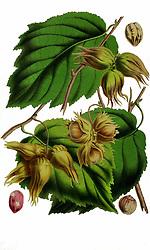 Belgique horticole.<br />Liége.<br />https://biodiversitylibrary.org/page/42990396