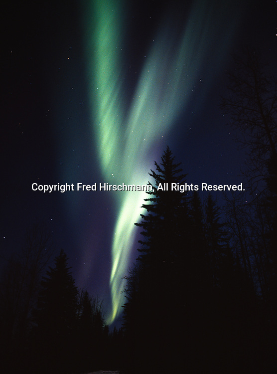 Northern lights above boreal forest northeast of Fairbanks, Chena River State Recreation Area, Alaska.