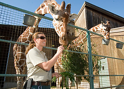 Sarah King of Walnut Creek, Calif., the primary giraffe keeper at the San Francisco Zoo, conducts the public feeding of the reticulated giraffes Monday, Sept. 6, 2010 in San Francisco. (D. Ross Cameron/Staff)