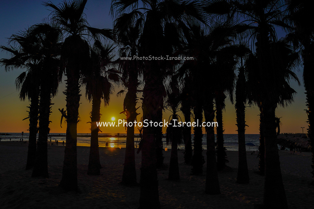 Silhouette of palm tree on the beach at sunset. Photographed on the Tel Aviv Beach, Israel in March