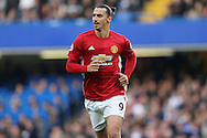 Zlatan Ibrahimovic of Manchester United looking on. Premier league match, Chelsea v Manchester Utd at Stamford Bridge in London on Sunday 23rd October 2016.<br /> pic by John Patrick Fletcher, Andrew Orchard sports photography.