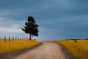 Rural road leading to a Montana ranch