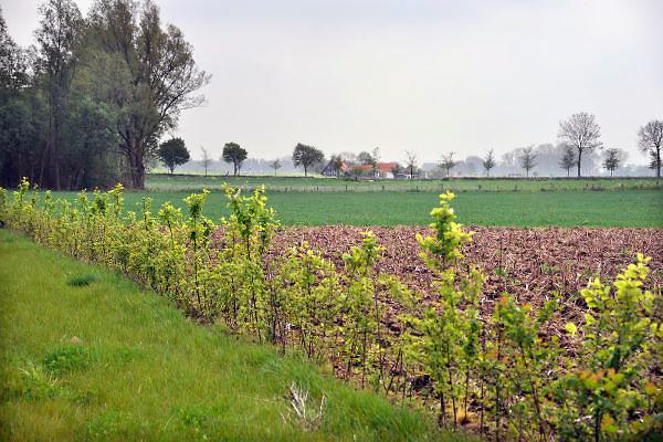 Nederland, Ubbergen, 10-5-2012Serie van verschillende beelden van de Ooijpolder, de boerenlandpaden en nieuwe aanplant van heggen en ecologische verbindingszone van de VNC, vereniging nederlands cultuurlandschap.Foto: Flip Franssen/Hollandse Hoogte