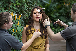 © Licensed to London News Pictures. 12/01/2018. Wisley, UK. Assistants place butterflies on Jessie Baker during a photocall for 'Butterflies in the Glasshouse' at RHS Garden Wisley. Running from from 13 January - 4 March 2018 - over 50 species are let loose in the glasshouse to fly freely among the Tropical Zone to allow interaction with visitors.Photo credit: Peter Macdiarmid/LNP