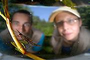 rechts: Marlen Mährlein (Limnologie von Fluss-Seen) und<br /> links: Jürgen Schreiber (Experte für Makrozoobenthos mit Großkrebsen) beobachten eine  Kleinlibellenlarve der Gebänderten Prachtlibelle (Calopteryx splendens)