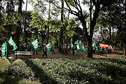 Belo Horizonte_MG, Brasil..Eleicoes 2008. Membros do Partivo Verde fazem caminhada saindo da praca da Liberdade ate o comite de campanha do candidato Marcio Lacerda (PSB), onde reafirmaram seu apoio a candidatura...Elections 2008. Members of the Partido Verde are walking from the Liberdade Square until the campaign committee of the candidate Marcio Lacerda (PSB), which reaffirmed its support for the candidate...Foto: LEO DRUMOND /  NITRO