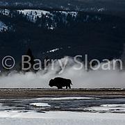 Yellowstone and Big Sky