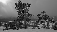 Two Trees with a Winter Storm Approaching. Rocky Mountain National Park. Image taken with a Nikon D2xs camera and 17-35 mm f/2.8 lens (ISO 100, 17 mm, f/11, 1/160 sec).
