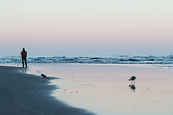 Photographer and seagulls on Cannon Beach. Ecola State Park, Oregon, USA.