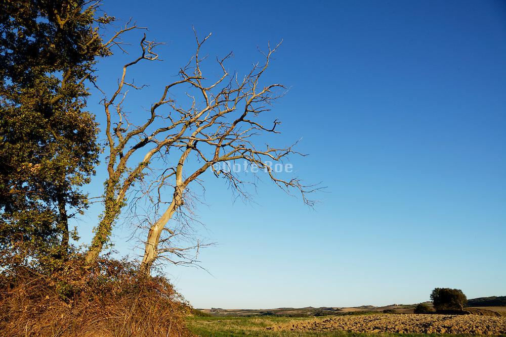 dead trees in landscape