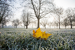 Windsor, UK. 22nd November, 2018. A heavy frost alongside the Long Walk in Windsor Great Park. There was widespread frost and freezing fog in Berkshire this morning but temperatures are expected to rise to more normal temperatures for November for a few days from tomorrow.
