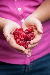 Handful of picked raspberries