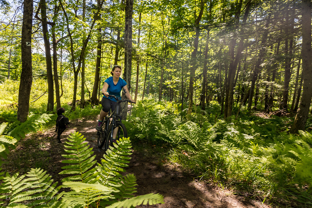 A woman rides her mountain bike (with her dog) at the Shepards Farms Preserve in Norway, Maine.