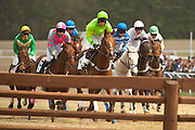 2  April, 2011:  Runners in the C.P & Edith Wills DuBose Cup timber race charge toward one of the fences early on in the 3 mile timber race.