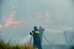 August 14, 2017 - Kalamos, Greece - Flames rise during a forest fire at Kalamos village, north of Athens. A total of 53 wildfires broke out in Greece Saturday and more have done so Sunday, including at the beach resort of Kalamos near Athens. (Credit Image: © Eurokinissi via ZUMA Wire)