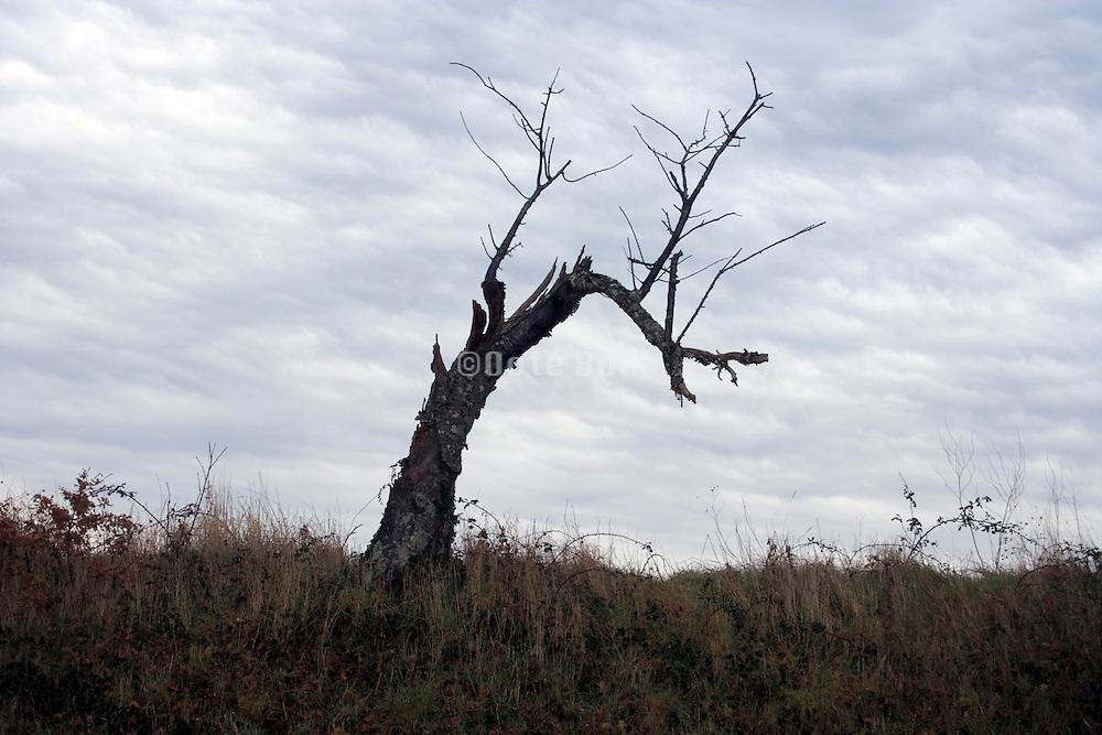 dead tree in the autumn season against a gray sky