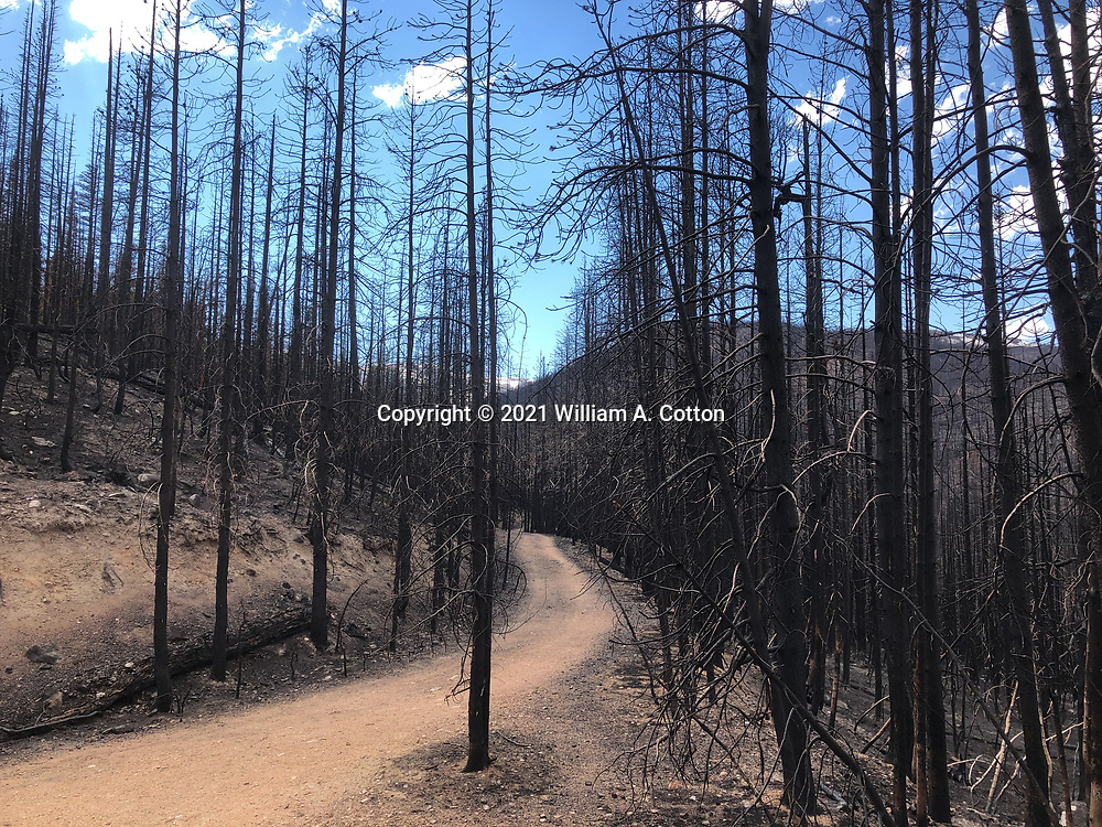 The Blue Lake Trail goes through trees blackened by the Cameron Peak Fire, June 8, 2021.