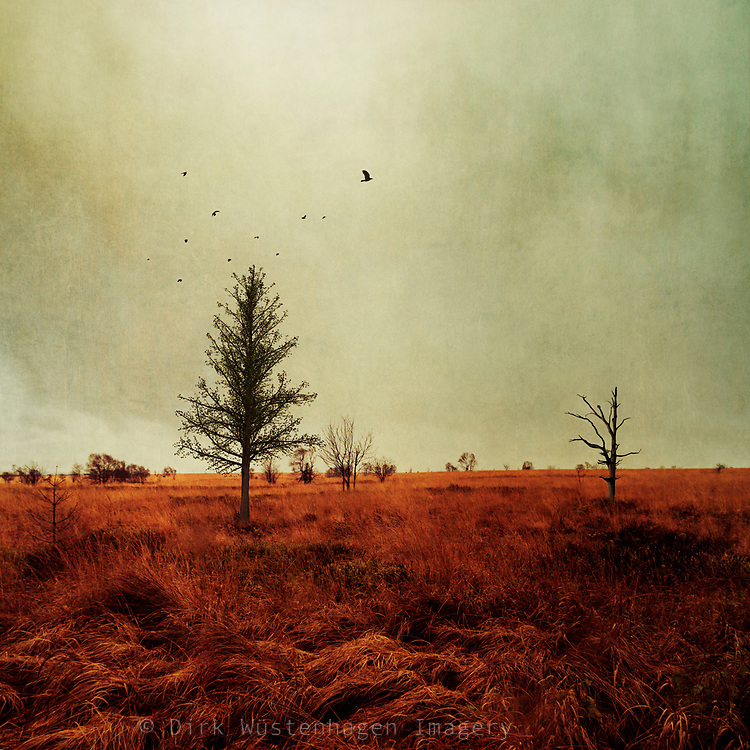 High Fens, Belgium on a windy November day - photograph processed with texture overlays