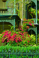 Bougainvillea (flowering plants), Garden District, New Orleans, Louisiana, USA