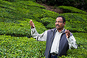 13th February 2013, Munnar, Kerala, India. Mr J.Durairaj, Assistant Director-Advisory Services of the UPASI Tea Research Foundation Regional Centre in Munnar, Kerala, India on the 13th February 2013 .<br /> <br /> Tea production in India is facing challenges not just from China and other competitors but from the rising cost of labour and especially fertilisers.<br /> <br /> PHOTOGRAPH BY AND COPYRIGHT OF SIMON DE TREY-WHITE<br /> <br /> + 91 98103 99809<br /> + 91 11 435 06980<br /> +44 07966 405896<br /> +44 1963 220 745<br /> email: simon@simondetreywhite.com photographer in delhi