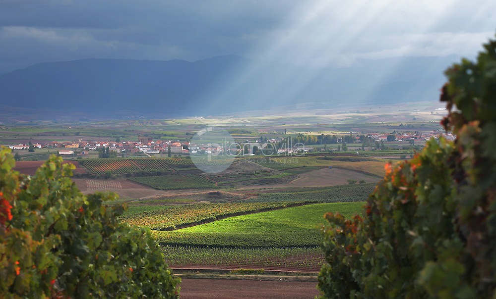 Azofra. LA Rioja ©Daniel Acevedo / PILAR REVILLA