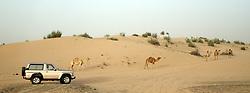 June 28, 2017 - China - Desert Safari?in Dubai (Credit Image: © SIPA Asia via ZUMA Wire)