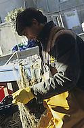 Pescatore a strascico nel porticciolo di MuggiaTrawl fishermen in the port of Muggia.