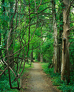 Cedar-line trail at Mount Locust, likely a field trail, Natchez Trace Parkwy, Mississippi.